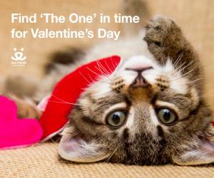 Cat image - Facebook Timeline 1200x1000